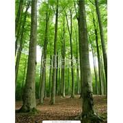Удаление опасных деревьев фото