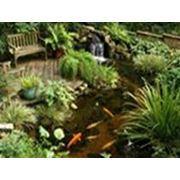 Водные сады фото