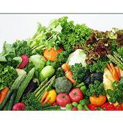 Экспорт фруктов и овощей фото