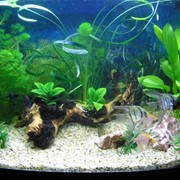 Консультации по запуску аквариума фото