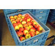 Ящики пластиковые для яблок фото
