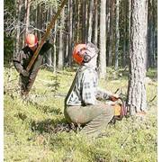 Лесохозяйственные работы. фото