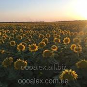 Донбасс фото