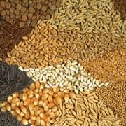 Пакетированные семена. фото