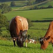 Дистанционные курсы повышения квалификации в сфере сельского хозяйства фото