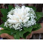 Свадебный букет из тюльпанов и гипсофилы фото