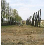 Обрезка деревьев, спил дерева, валка деревьев частями, удаление, кронирование деревьев СПб ЛО фото