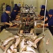 Биопрепарат для обработки сточных вод и удаления неприятного запаха на рыбкомбинате - Вэйст Трит ТМ MICROZYME (США),2млрд.КОЕ/г фото
