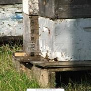 Уход за пчёлами после весенней ревизии фотография