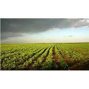 Охрана агропредприятий в Молдове фото
