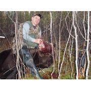Лайки, охота на Медведя фото