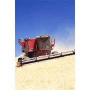 Сельскохозяйственное страхование фото