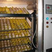 Инкубация яйца сельскохозяйственной птицы фото