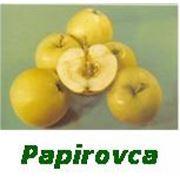 Яблоки Papirovka фото