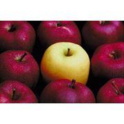 Яблоки летние в Молдове
