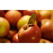 Яблоки Джонагоред фото