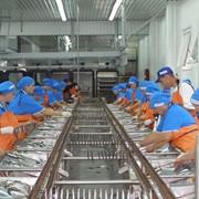 Производство рыбных консервов фото
