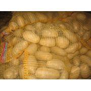 Картофель от производителя фото