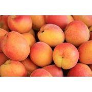 абрикосы фото