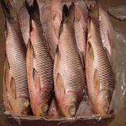 Рыба замороженная в ассортименте