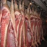 Свинина-полутуши, купить свинину фото