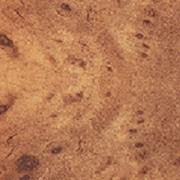 Столешница матовая поверхность Корень вяза, артикул 3106 фото