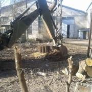 Корчевание старого сада. фото