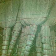 Веник-сорго промышленный фото