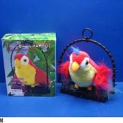 Разговаривающий попугай фото