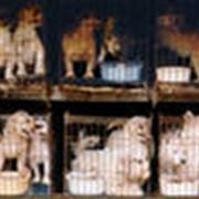 Животные домашние в Алматы фото