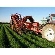 Страхование сельского хозяйства фото