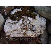 Декоративный природный камень-доломитизированный известняк фото