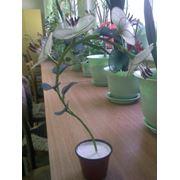 Flori decorative din capron. фото