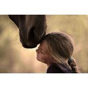 Конные прогулки прокат лошадей фото