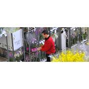 Растения комнатные и уличные фото