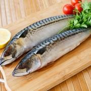 Риба скумбрия м/с в/у фото