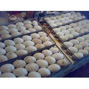 Яйца инкубационные фото