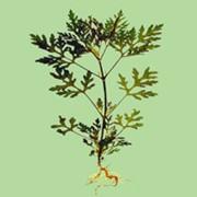 Уничтожению нежелательной травянистой и древесно-кустарниковой растительности гербицидами фото