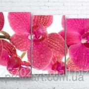 Модульна картина на полотні Рожева орхідея код КМ100160-070 фото