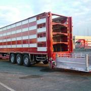 Перевозка сельскохозяйственных животных фото