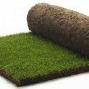 Готовый рулонный газон. Краснодар фото