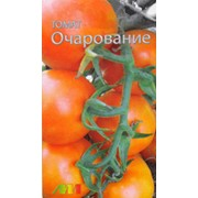 Семена томатов Очарование фото
