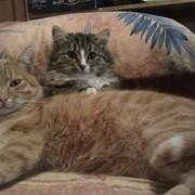 Кошки для съемок фото