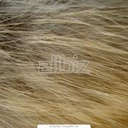 Мех рыжей лисы фото