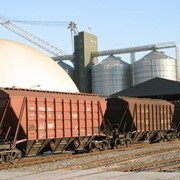 Отгрузка ж/д транспортом зерна, в Казахстане фото