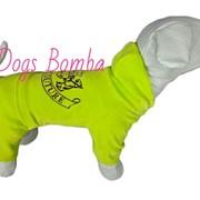Велюровый костюм для собак фото