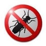 Уничтожение насекомых фото