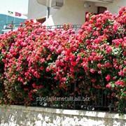 Устройство цветников и клумб №24 фото