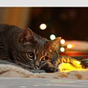 Картина с LED подсветкой 40*30см. 29549 фото