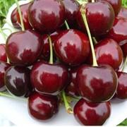 Черешня сорт Крупноплодная ТМ FRUTTOM фото